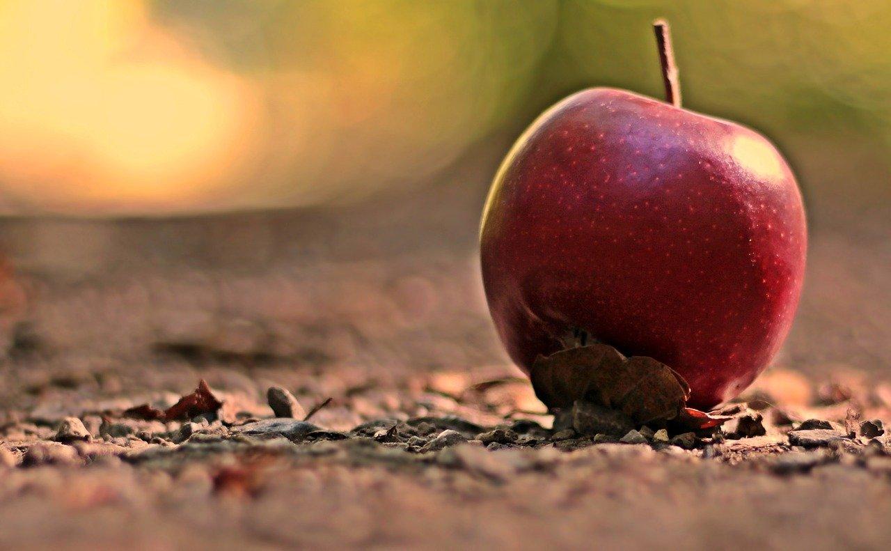 apple, fruit, red