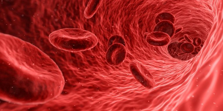 blood, cells, red